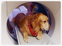 Animal imaging shared resources © UC Regents