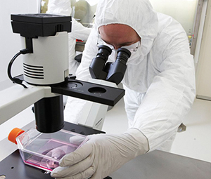 Stem cell researcher looks through microscope.