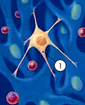 Illustration of cancer cell among other cells © UC Regents