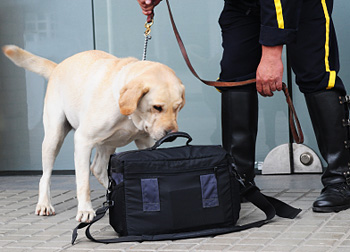Drug-sniffing dog checking baggage with handler © iStockphoto