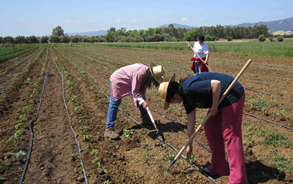 Instructor Jann Murray-Garcia and students working on farm © UC Regents