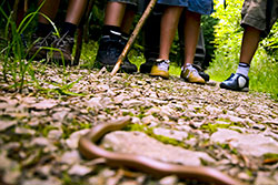 Children hiking on a trail keeping a safe distance away from a snake