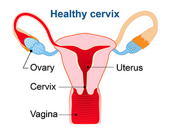 picture of health cervix