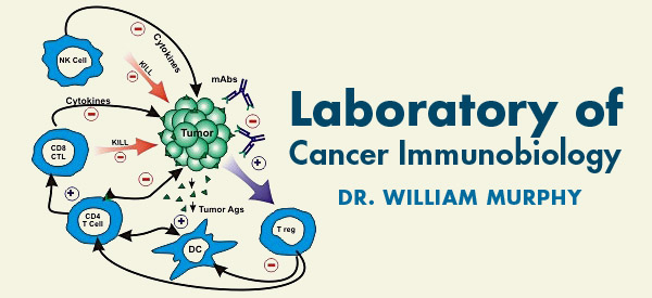 Laboroatory of Cancer Immunobiology - Dr William Murphy