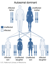 Inheritance of Huntington's Disease