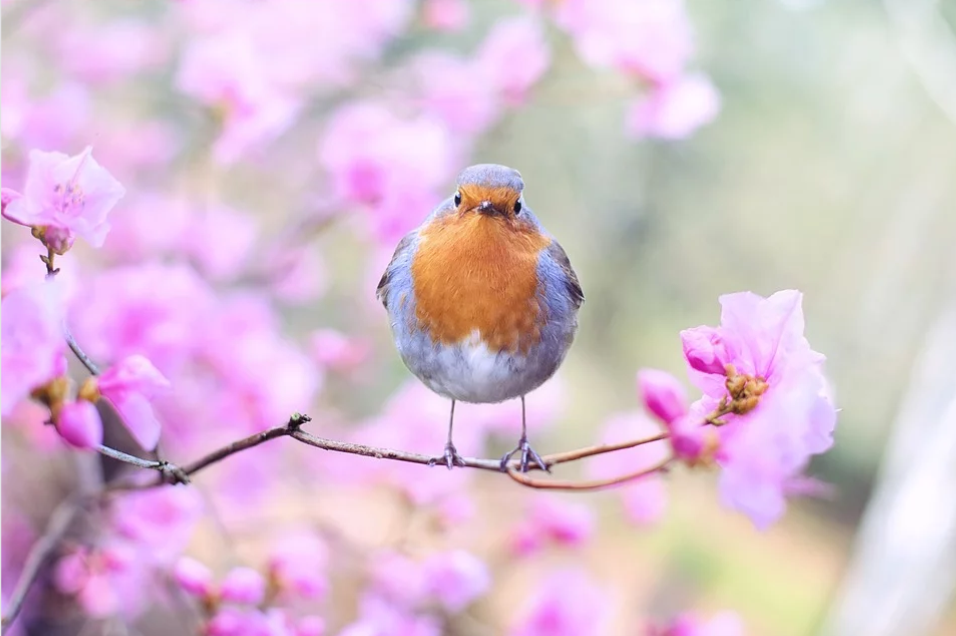 Spring flowers and bird