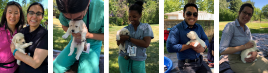 residents wellness pupplies neurology