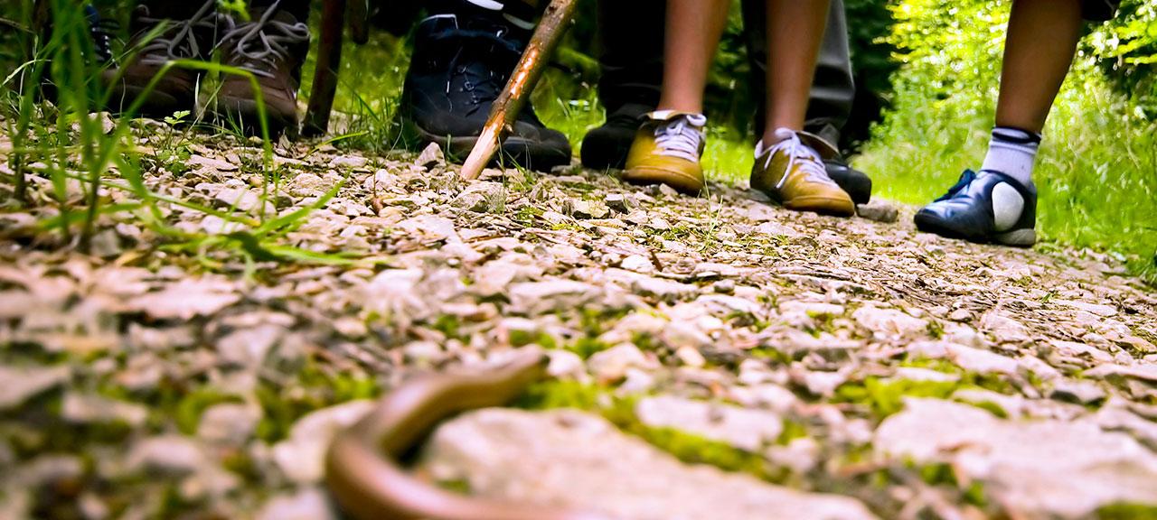 Kids looking a rattlesnake
